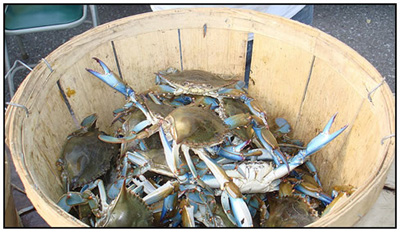 About Carifiesta, Cultures and Crabs